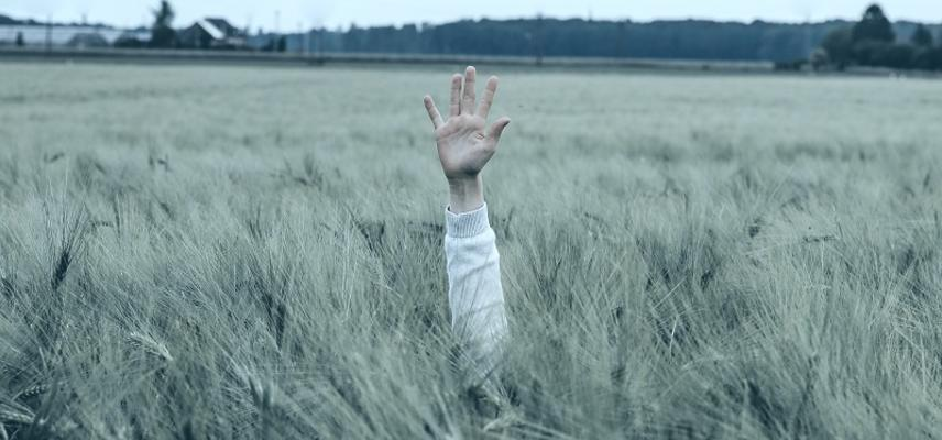 a person's arm held up above a tall field of wheat